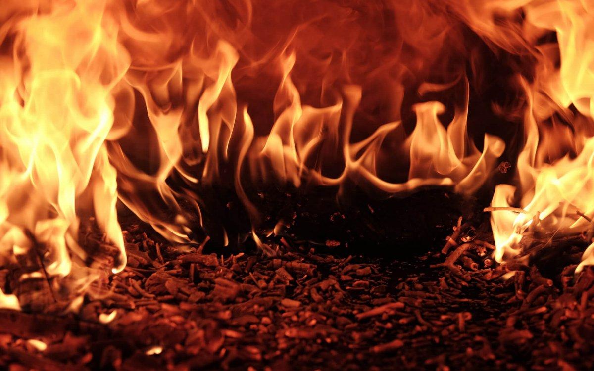 image-phoenix.jpg